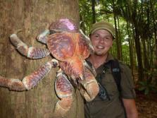Coconut Crab - un nume inocent pentru marimea lui