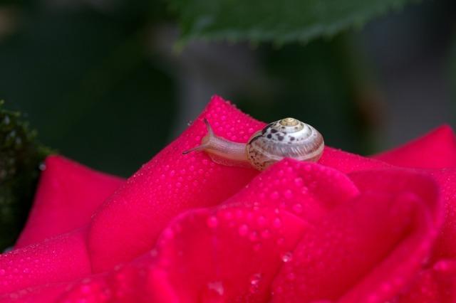 snail-2461195_960_720