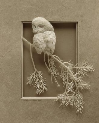 Boreal-owl-7214