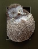 Hedgehog-7220